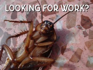 pest careers