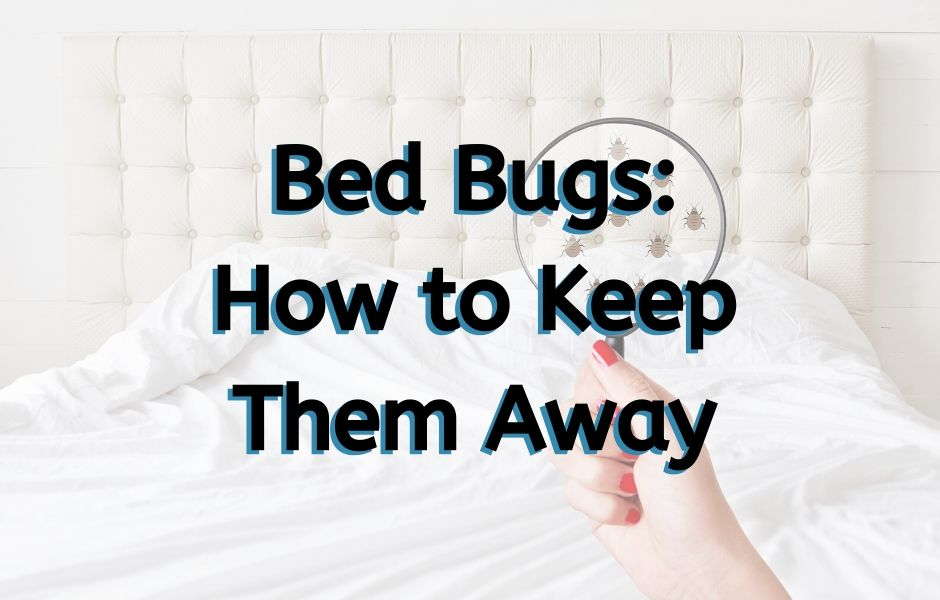 Bed Bugs – How to Keep them Away