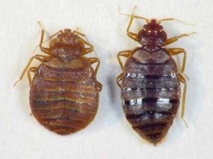 "Don't Let ""The Bed Bugs Bite"" This Holiday Season"