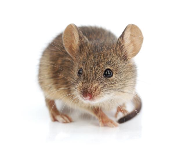 Little Black Bugs On Kitchen Counter: Economy Exterminators